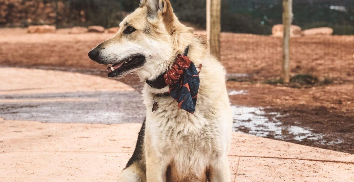 Dog Friendly Guide to Sedona, AZ